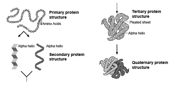 Protein Structure With Text Labels
