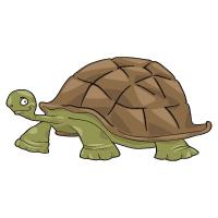 Animal - Turtle