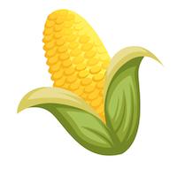 Fall - Corn