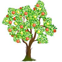 Summer - Tree