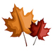 Fall - Leaves - Small