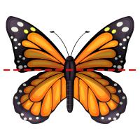 Symmetry - Butterfly 2