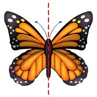 Symmetry - Butterfly 1