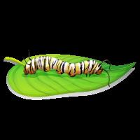 Pictograph - Larva