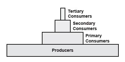 Energy Pyramid Without Percentages