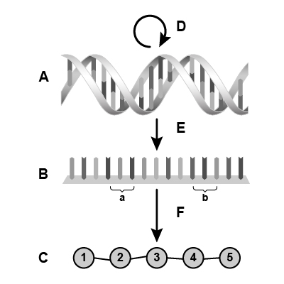 DNA Central Dogma Without Text Labels