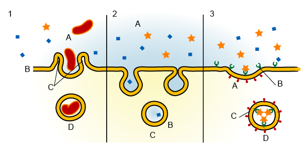 Endocytosis Without Text Labels