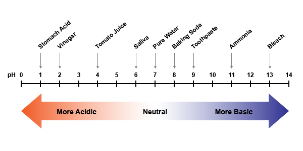 pH Scale With Labels