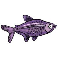 Animal - X-Ray Fish