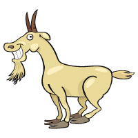 Animal - Goat
