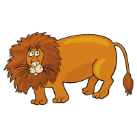 Animal - Lion