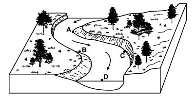 Meandering River