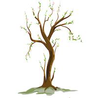 Spring - Tree