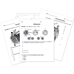 Eighth Grade Grade 8 Biology Questions For Tests And Worksheets