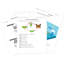 Printable Elementary Science Worksheets - HelpTeaching.com